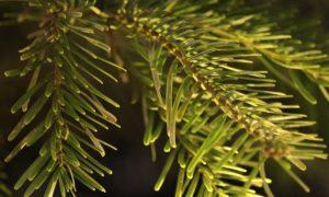 Spritzguss Weihnachtsbaum günstig kaufen